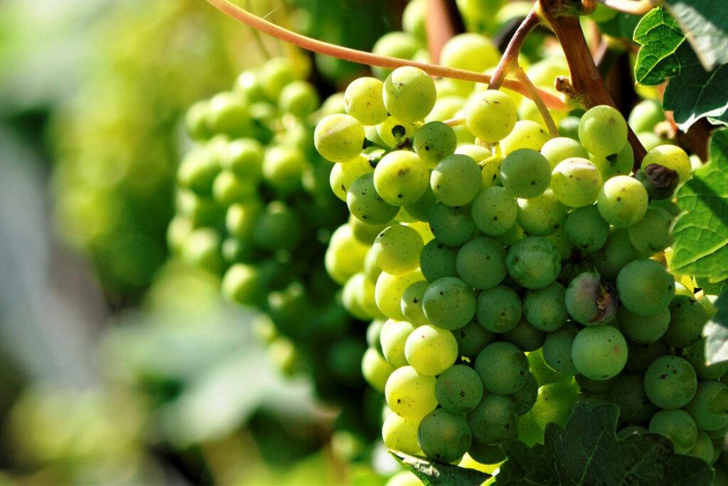 Feinkost Wein Mundi Weine